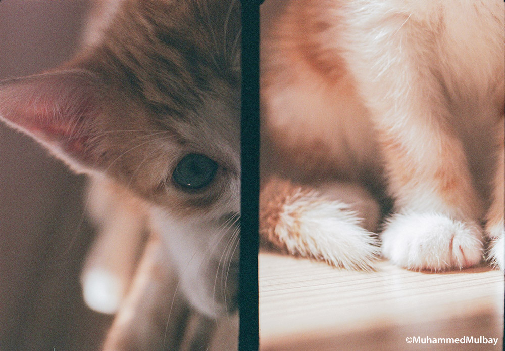 nikkormat-ft-kullanimi-muhammedmulbay-film-fotografciligi-1-